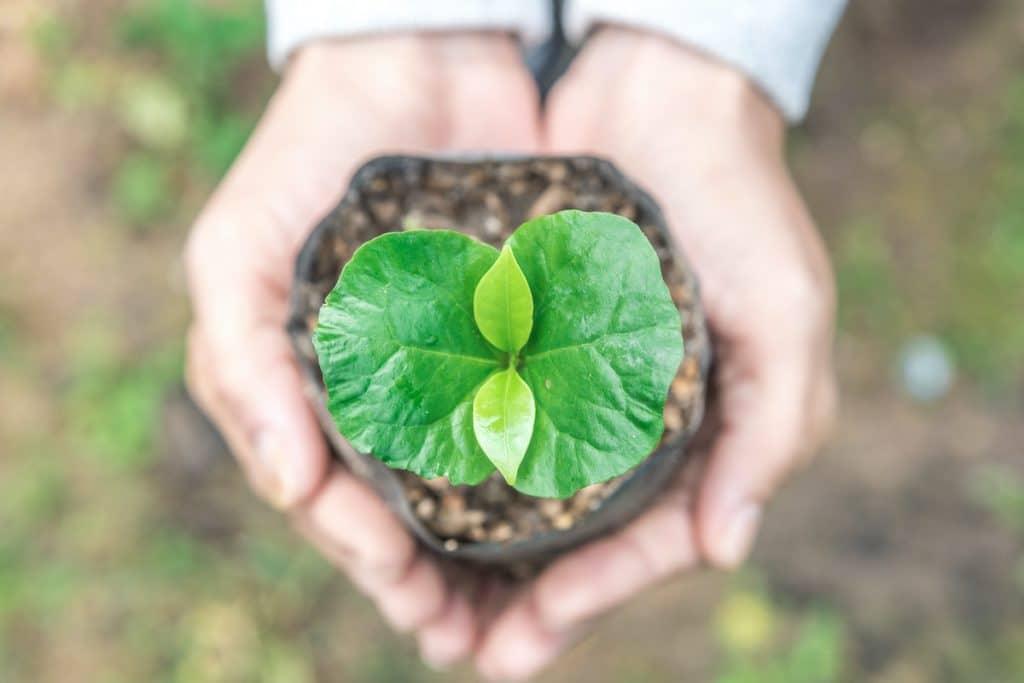 Sucafina 2030 sustainability strategy