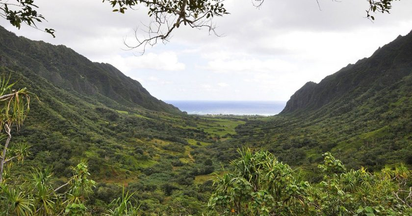 Hawaii coffee production